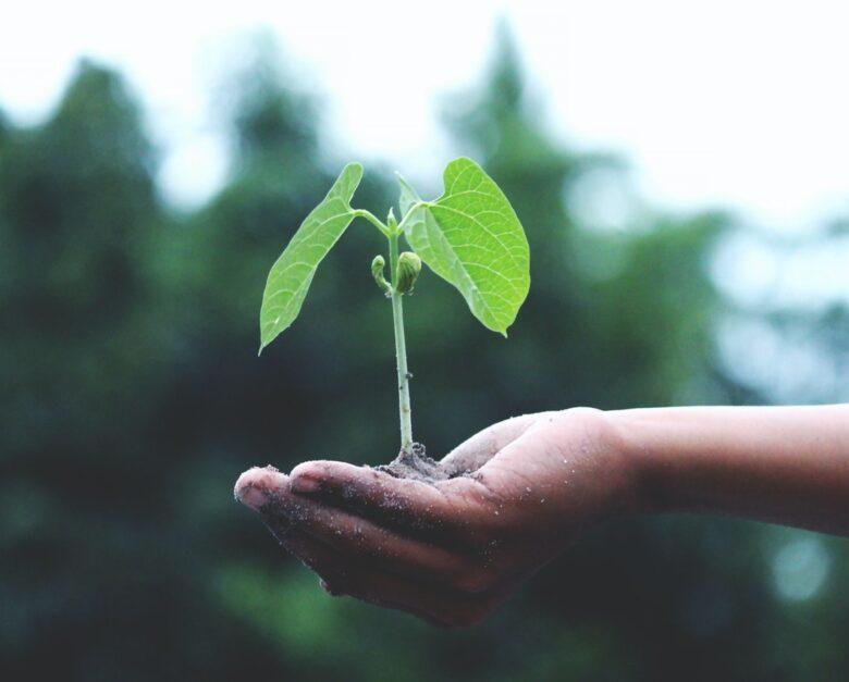 Grøn omstilling og bæredygtighed